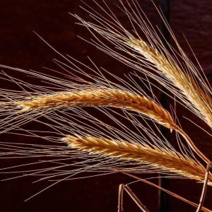 Barley Health Series with Dr Barry