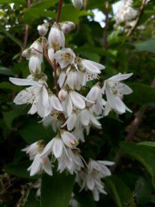 Flowering in Bonnevaux